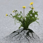 Growing and Developing Resilience